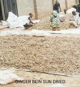 Sun dried Ginger ready for export