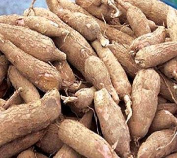 Good cassava root