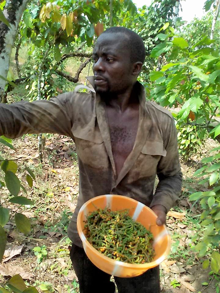 Harvesting-Njombe-Pepper-1595886631.jpg